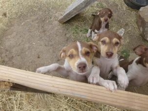 Puppies wanting to join in on the action!