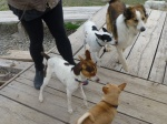 L-R - Biscuits, Butters, Tucker and Poki at the bottom of the picture